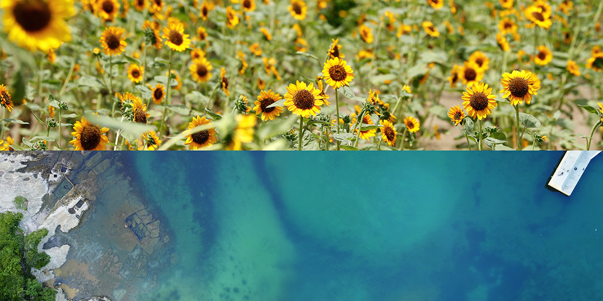 03blue_ocean_tateyama_sunflower